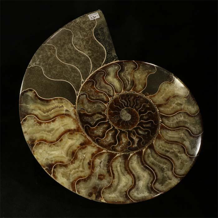 ammonit stein kaufen